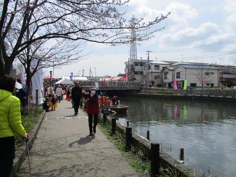 44新川千本桜17