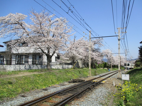 106桜の小道1