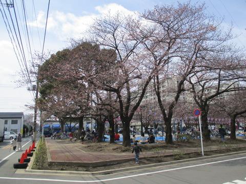 50宇喜田さくら公園1