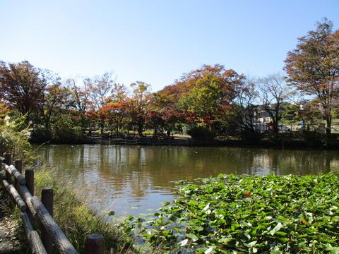 60菊名池公園4