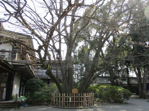214菩提樹1