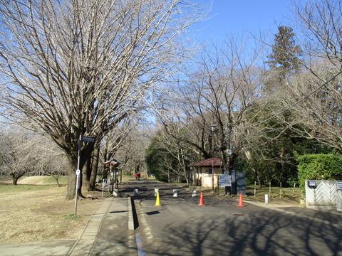 87佐倉城址公園1