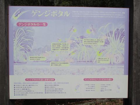 121ほたる公園5