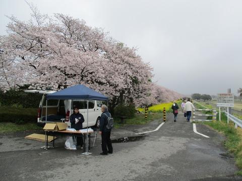 95熊谷桜堤1