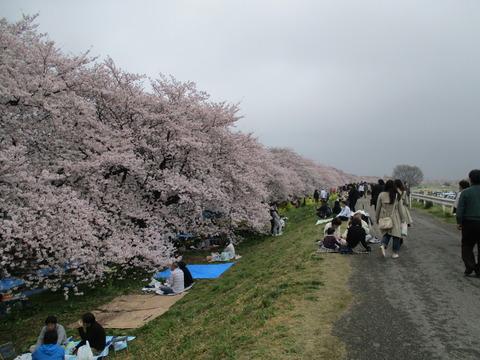 102熊谷桜堤8
