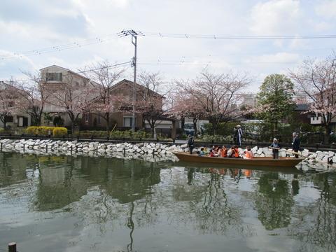 43新川千本桜16
