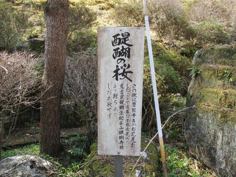 122醍醐の桜2