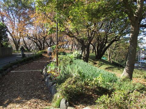 101菊名桜山公園3