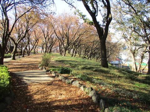 102菊名桜山公園4