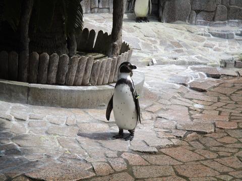 78自然動物園3