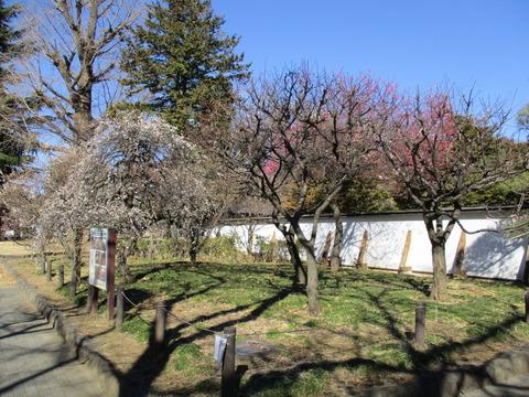 26菅刈公園内1