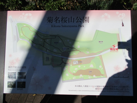 100菊名桜山公園2