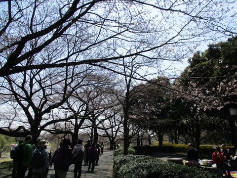 89桜並木2