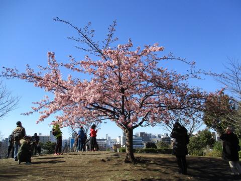 10西郷山公園3