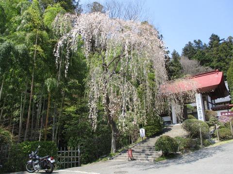 145宝登山神社6