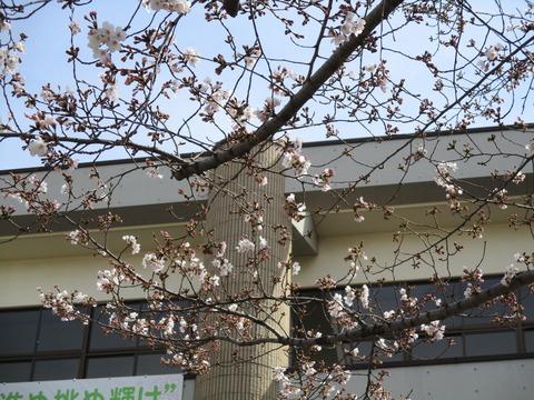 182桜木中学校2