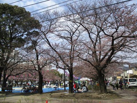 51宇喜田さくら公園2