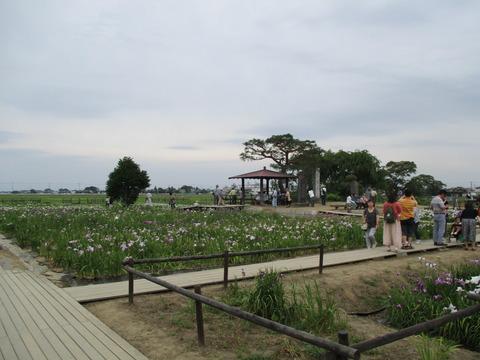 106菖蒲城址あやめ園5