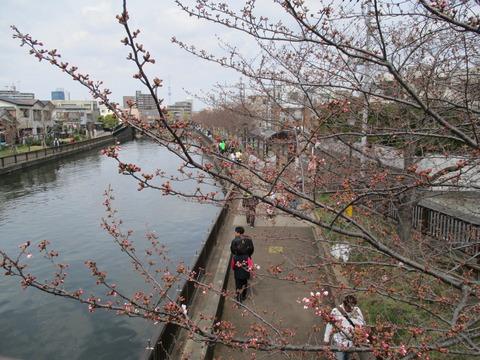 36新川千本桜9