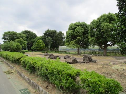 183鎮守の森公園2