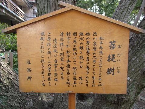 215菩提樹2
