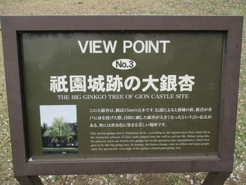 202祇園城跡の大銀杏1