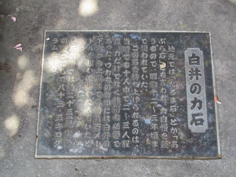80白井の力石2