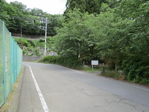 15桜見本園1