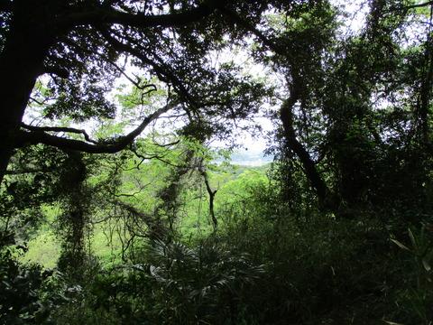 112木と眺望2