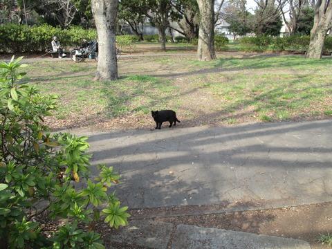 248黒猫1