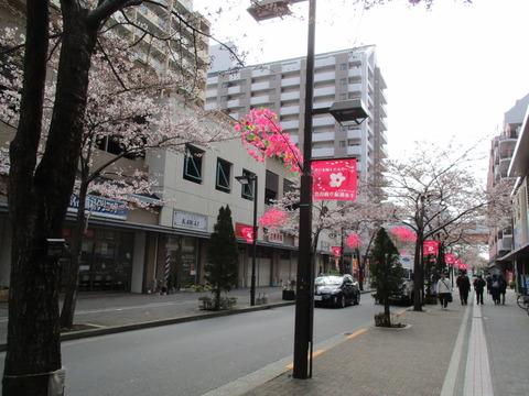 04千本桜通り商店会1
