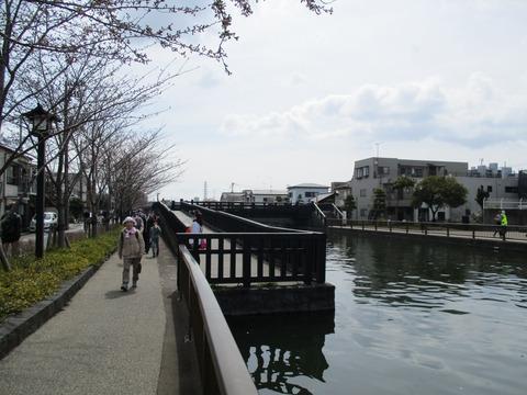 32新川千本桜5