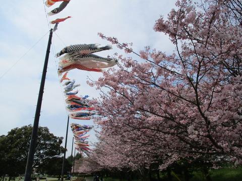 110小山総合公園5