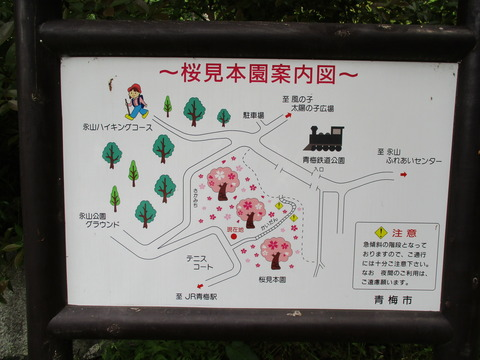 16桜見本園2