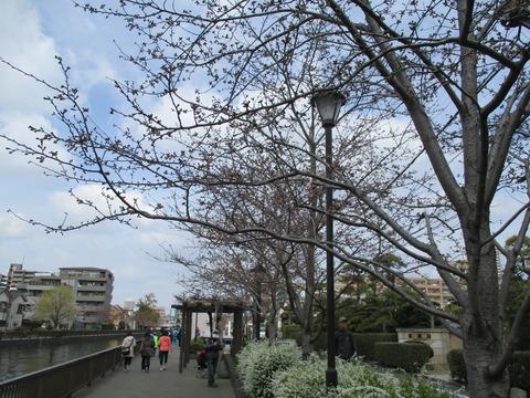 31新川千本桜4