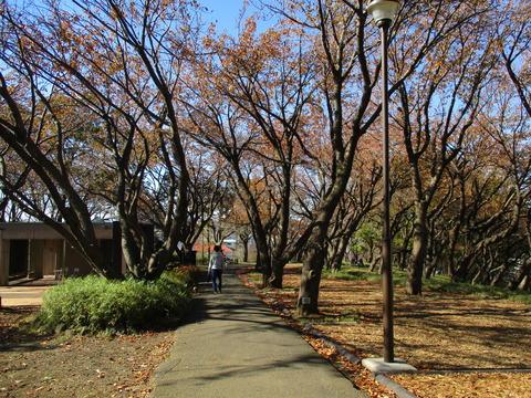 103菊名桜山公園5