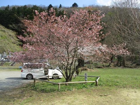 193岩田桜