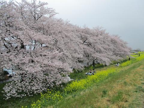 108熊谷桜堤14