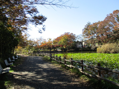 59菊名池公園3