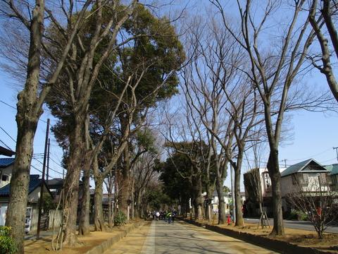 14氷川参道3