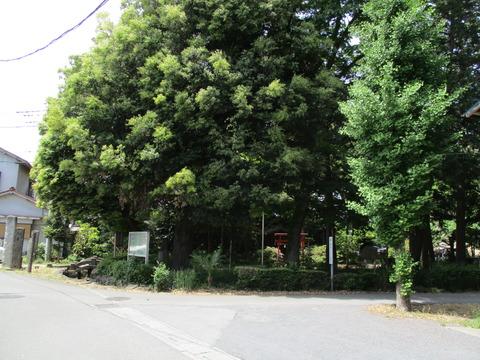 145富士浅間神社1