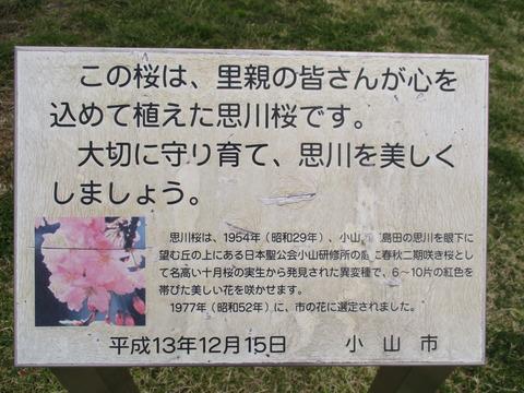 218思川アプローチ6