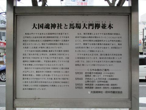 33馬場大門のケヤキ並木4