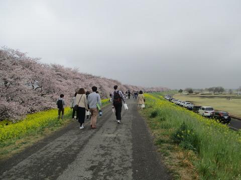 103熊谷桜堤9