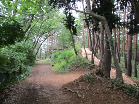 183霞丘陵ハイキングコース5