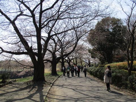 91桜並木4