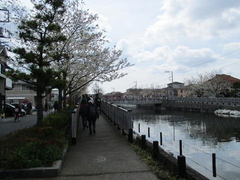 41新川千本桜14