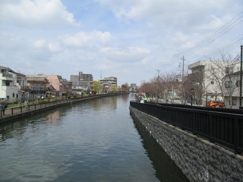 34新川千本桜7