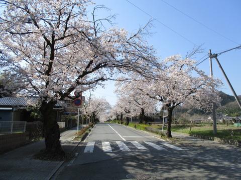 68再び北桜通り1