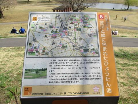 92桜並木5